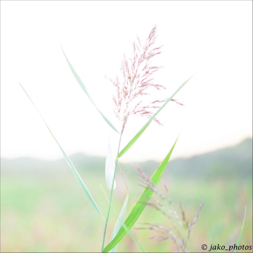 voorbeeld high key fotografie 2